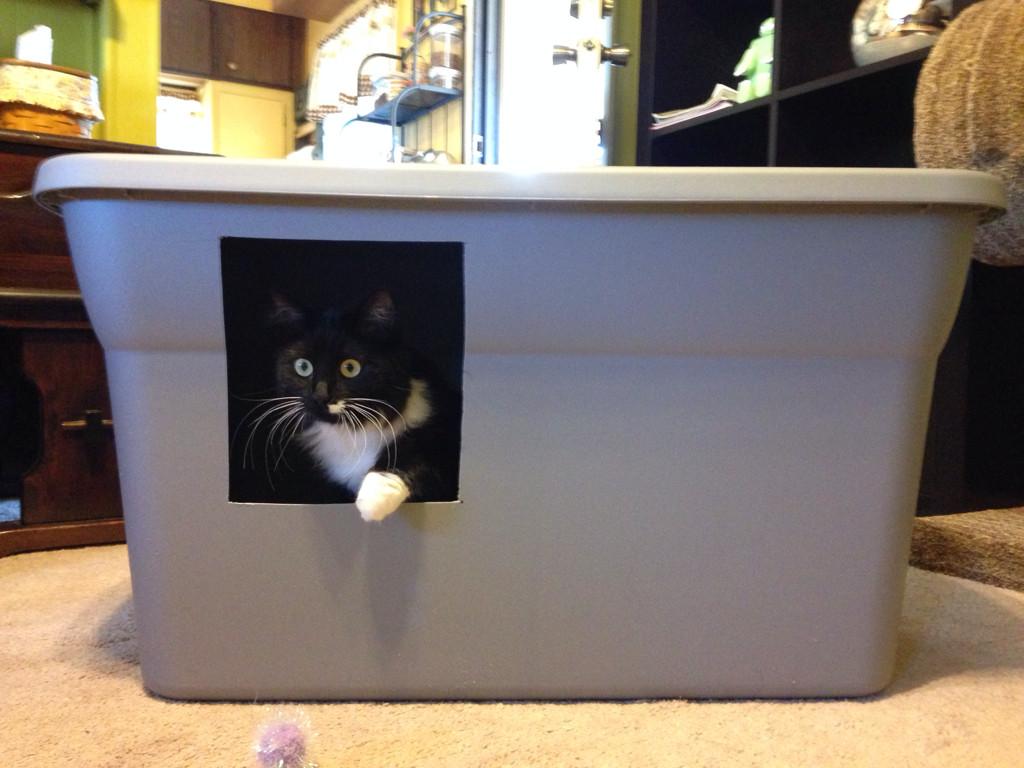 DIY Cat Litter Box Cover  An Easy DIY Cat Litter Box Ideas – HomesFeed