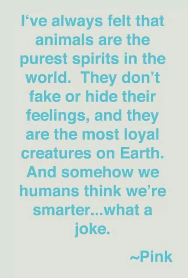 Fur Baby Quotes  58 best images about Fur Baby Quotes on Pinterest