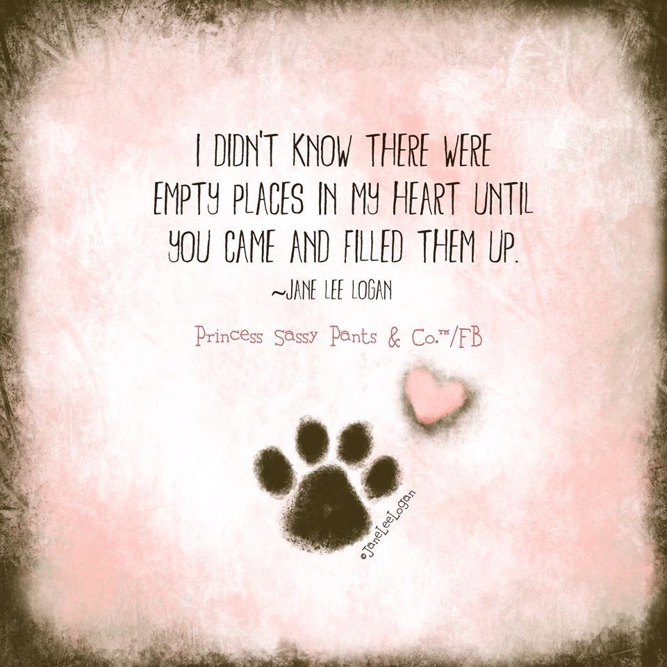 Fur Baby Quotes  Love Fur Babies Quotes QuotesGram