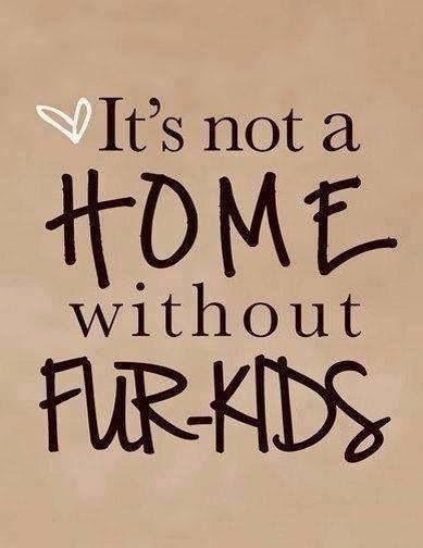 Fur Baby Quotes  Fur Babies Quotes QuotesGram