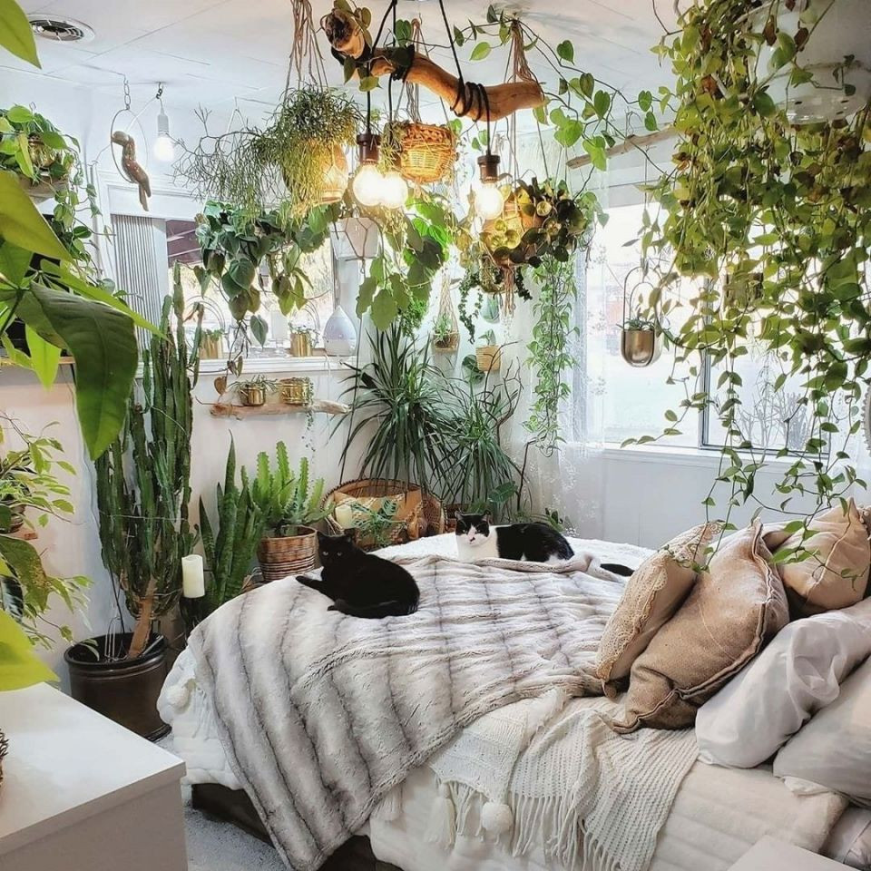 Small Bedroom Plants  The Best Plants for Your Bedroom According to Plantfluencers