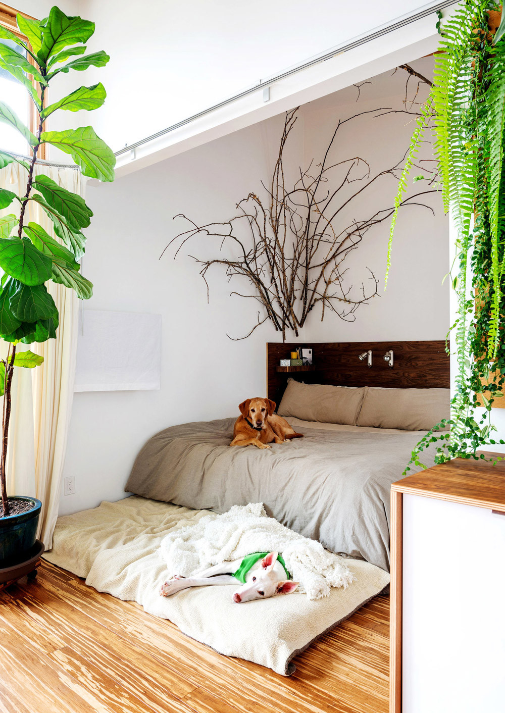 Small Bedroom Plants  Design Highlight Bedrooms Using Live Plants as Decor