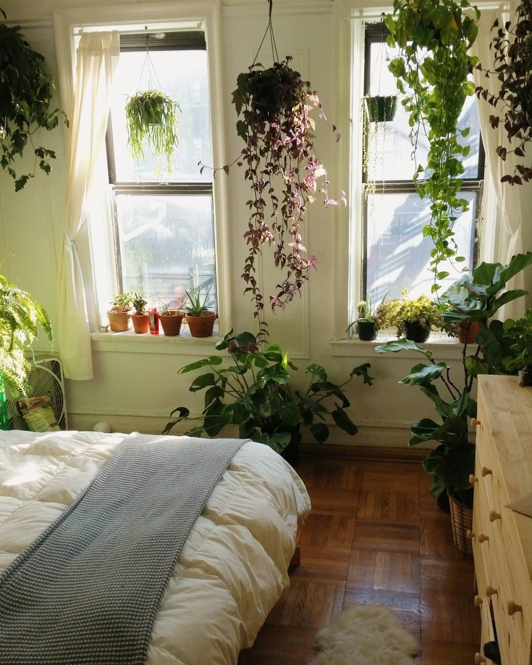 """Small Bedroom Plants  Urban Jungle Bloggers on Instagram """"We could stay here"""